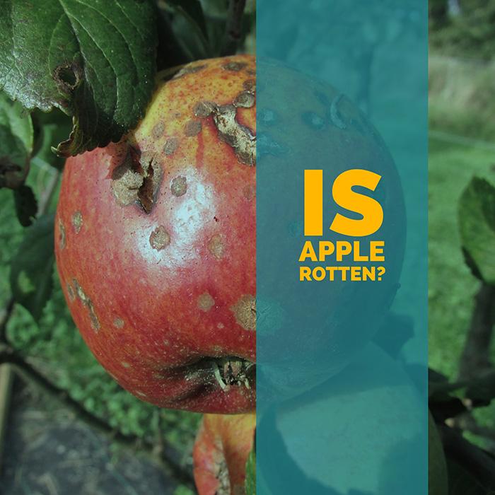 Is Apple Rotten?